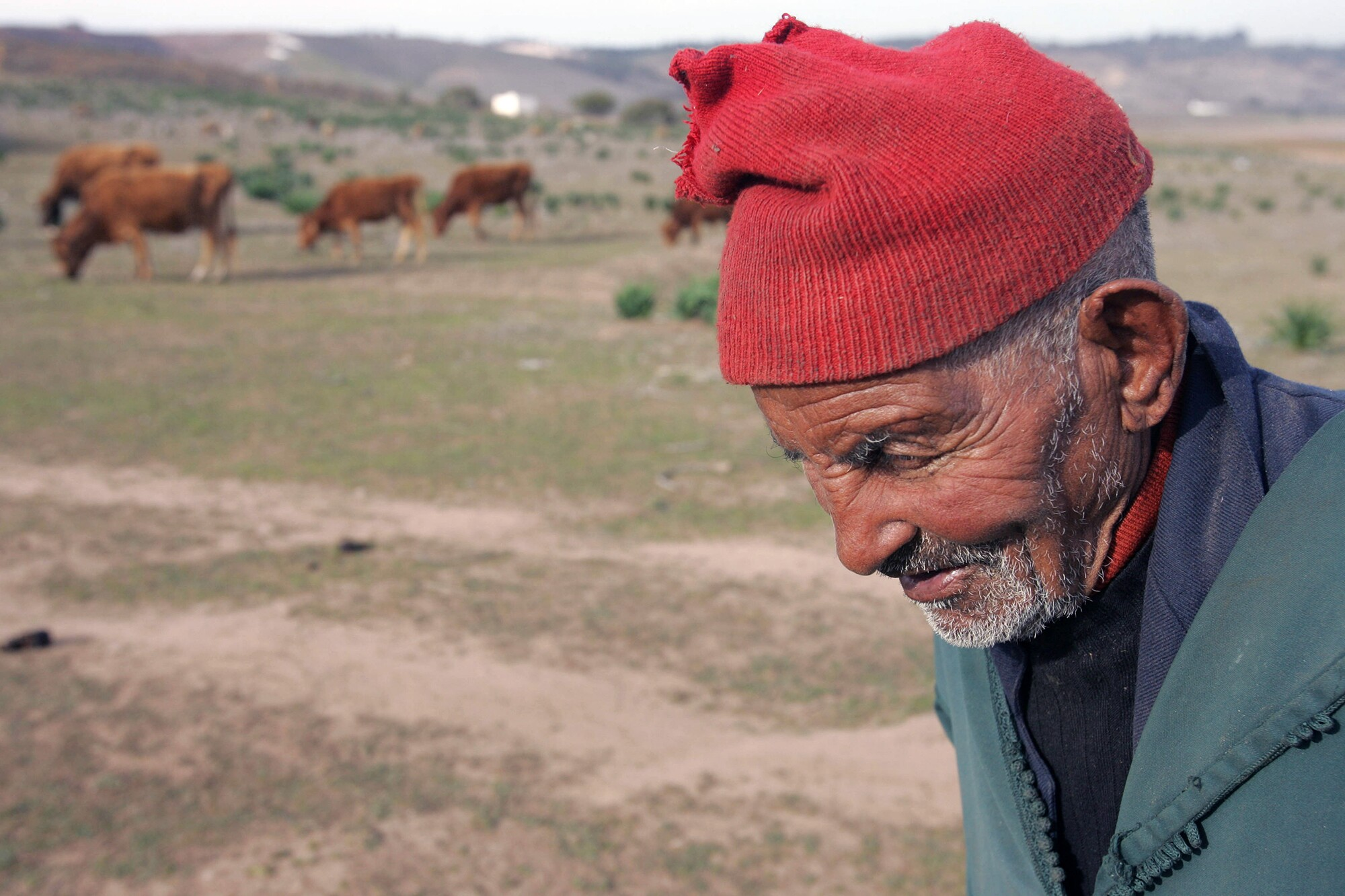 Plan Maroc Vert, le grand mirage - Le Desk